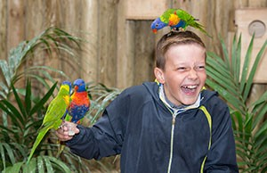 lorikeets-guests-300px