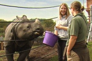 RHINO KEEPER FOR THE DAY