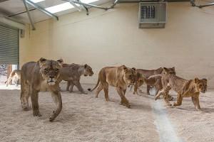 LION HOUSE TOUR